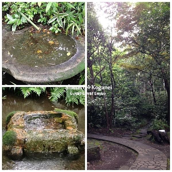 美術の森緑地 湧水