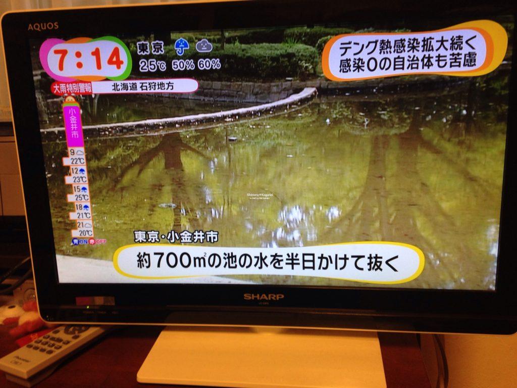 テレビ 目覚ましテレビ 小金井市デング熱