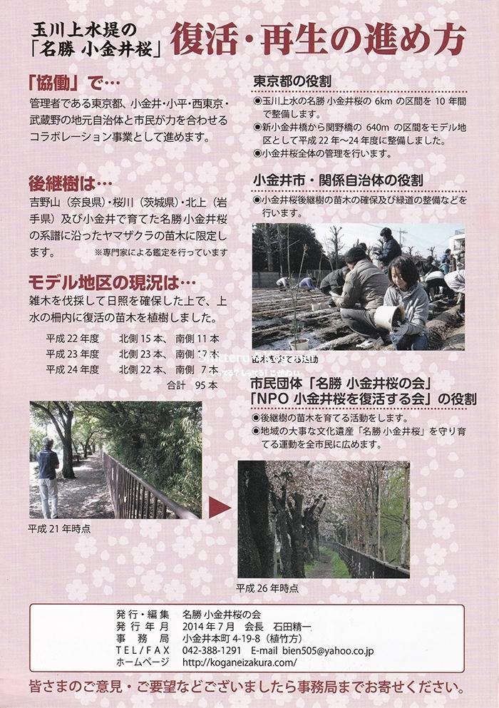 小金井桜の復活をめざして-3