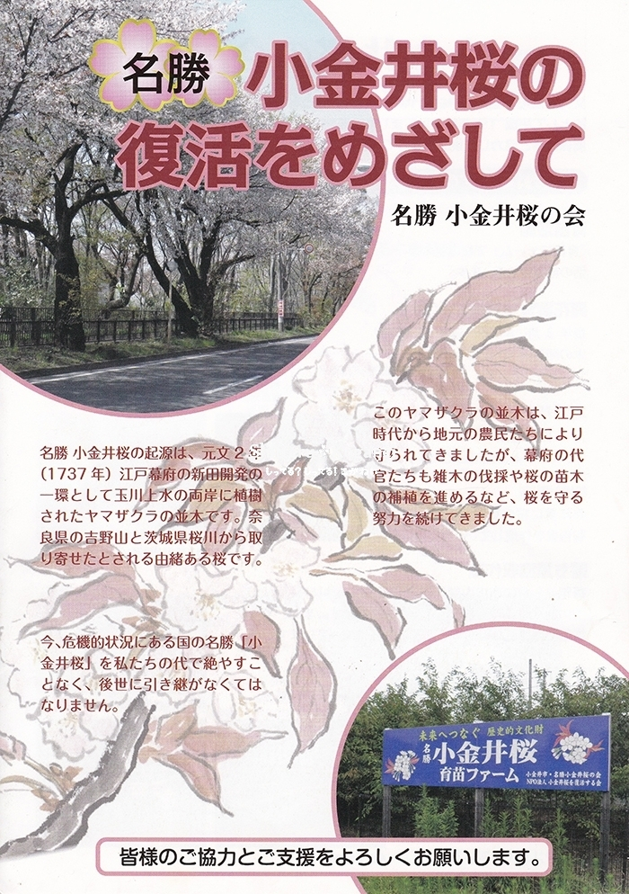 小金井桜の復活をめざして