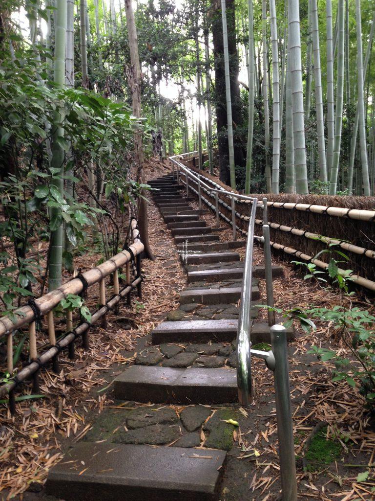 美術の森 階段