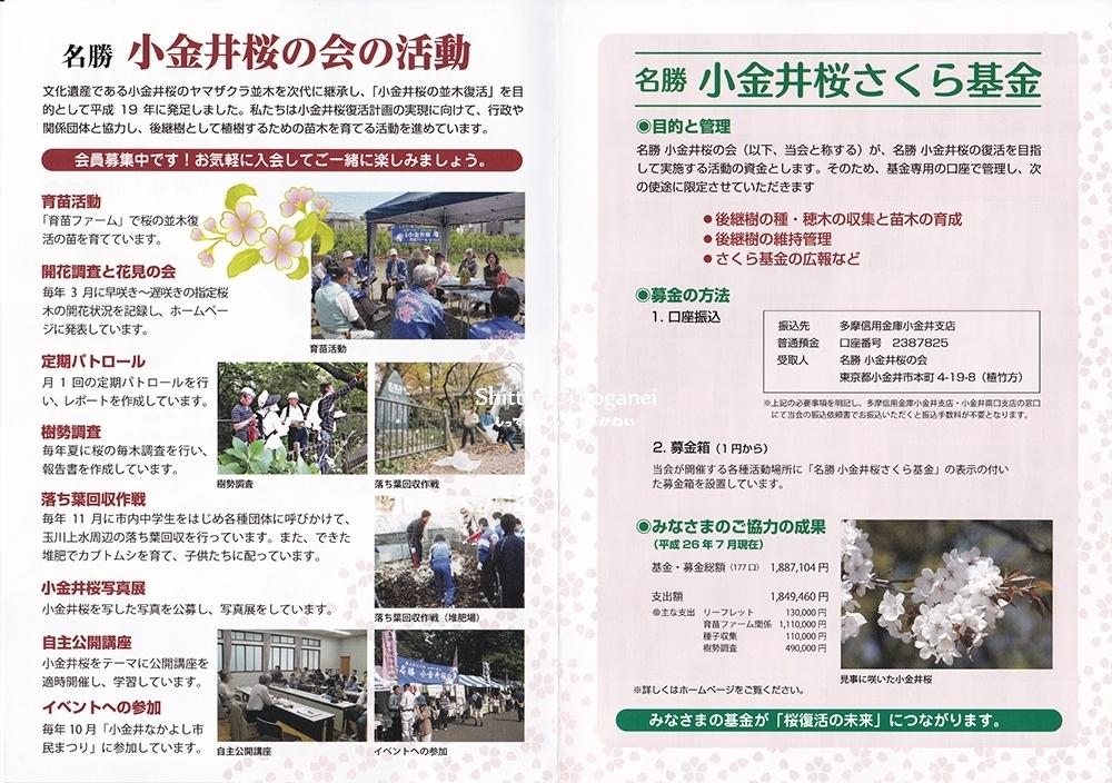 小金井桜の復活をめざして-2